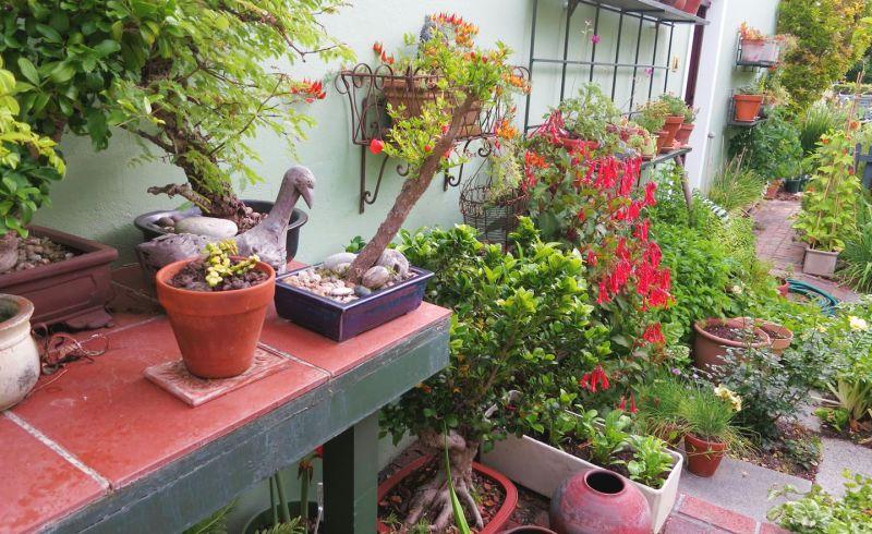 Best Garden Choices Plant Cultures