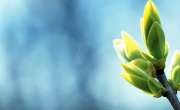 spring-ppt-template-green-blue-nature-plants--backgrounds-wallpapers